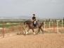 Arbeit mit Pferd