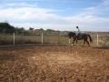 besuch_steff_pferde-141