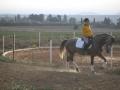 besuch_steff_pferde-161