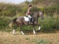 besuch_steff_pferde-167