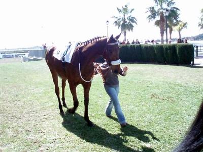 pferde_vier-014