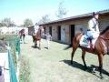 pferde_vier-036