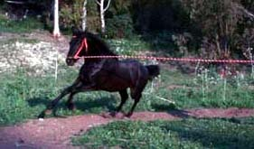LKW PotroVK Torrecera 194