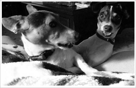Licky und Tina2008 2